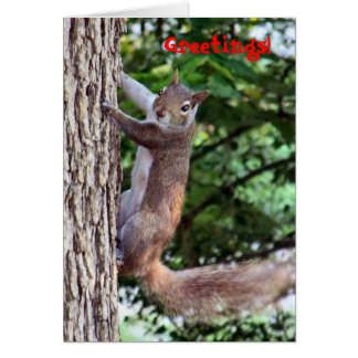 Oh Nuts!, Greetings! Card