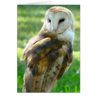 Oh Owl Blank Card