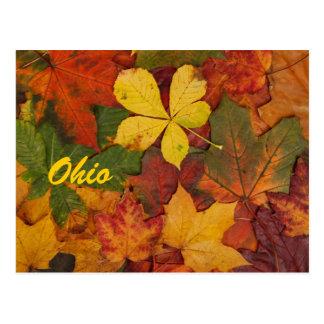 Ohio Autumn Leaves Postcard