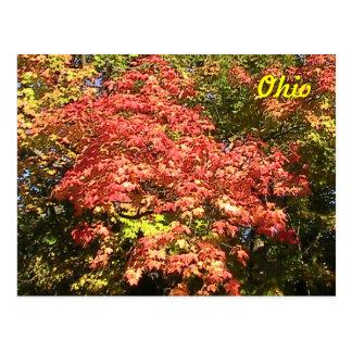 Ohio ( Autumn) Postcard