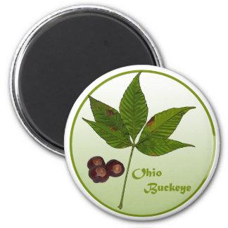 Ohio Buckeye Tree 2 Inch Round Magnet