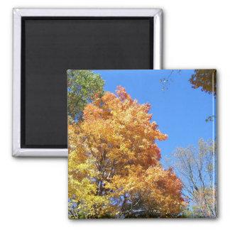 Ohio Fall 2 Inch Square Magnet