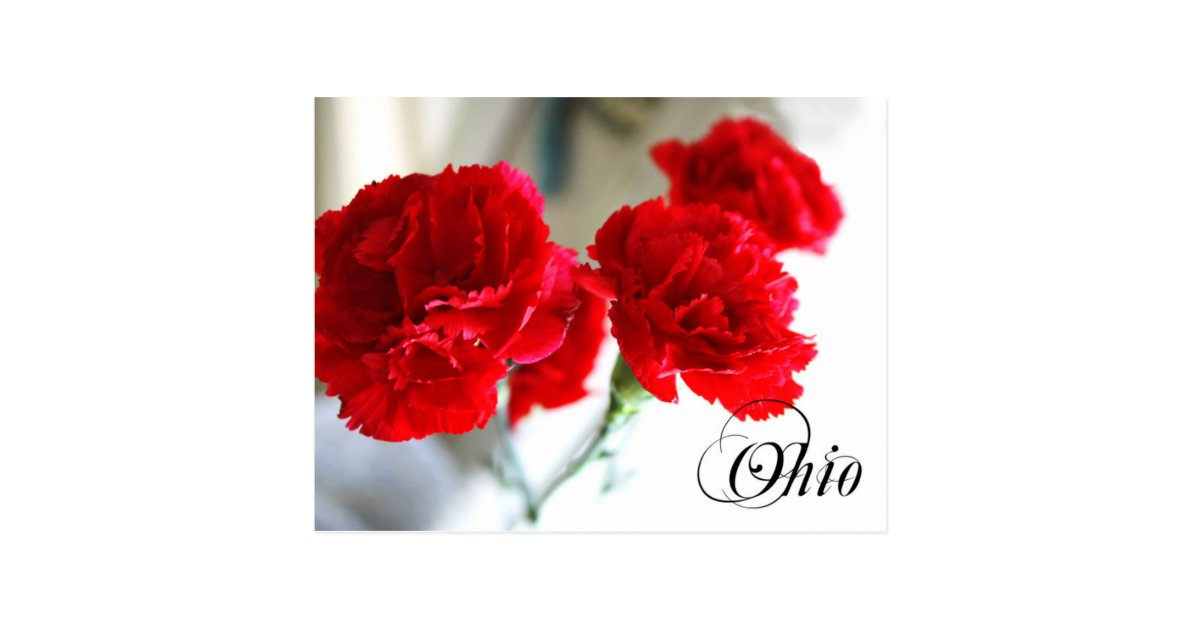 Red State Zazzle Carnation Ohio Postcard Flower: |