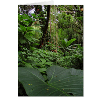Oído de elefante en selva tropical felicitacion