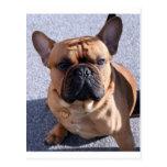 Oídos de perro tarjeta postal
