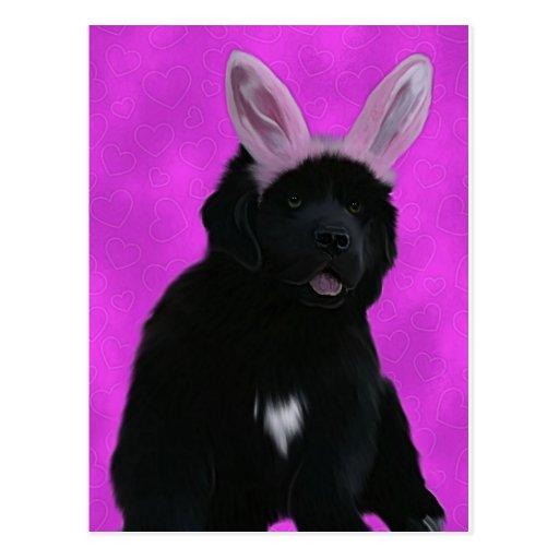 Oídos del conejito postal
