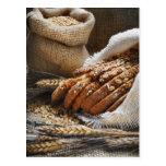Oídos del pan y del trigo tarjeta postal
