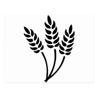 Oídos del trigo postal