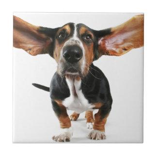 Oídos largos del perro azulejo cuadrado pequeño
