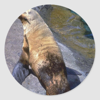 Oil-fouled Harbour Seal Sticker