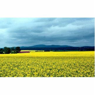 Oil-seed rape, Angus, Scotland at the Cornish Rivi Photo Cutout