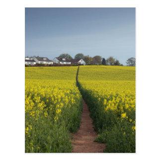 Oilseed Path Postcard