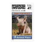Oink para la paz timbres postales