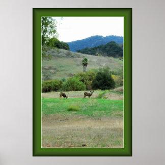 Ojai Deer Poster with Customizable Frame Color