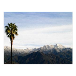 Ojai Palm Postcard