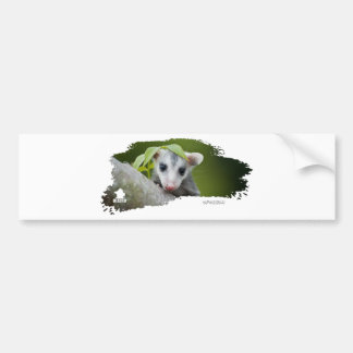 Ojatro Opossum Baby 01 Car Bumper Sticker