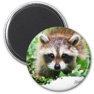 Ojatro Raccoon Kit 01 2 Inch Round Magnet