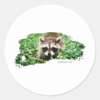 Ojatro Raccoon Kit 01 Classic Round Sticker