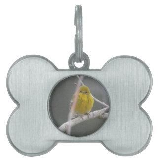 Ojeada de la naturaleza del pájaro de la curruca d placa mascota