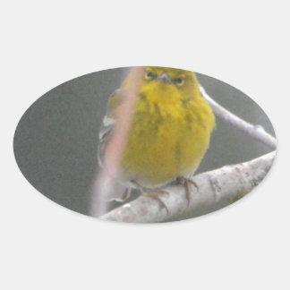 Ojeada de la naturaleza del pájaro de la curruca pegatina ovalada