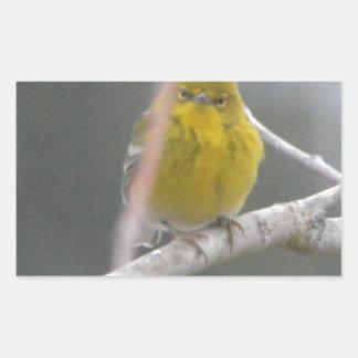 Ojeada de la naturaleza del pájaro de la curruca pegatina rectangular