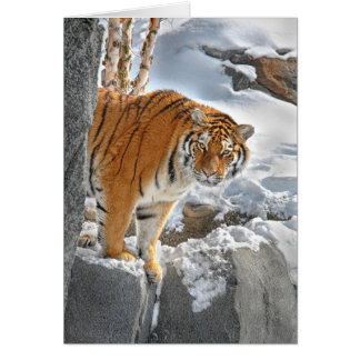 Ojeada del tigre tarjeta de felicitación