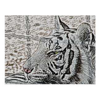 ojo blanco del amarillo del bosquejo del tigre postales