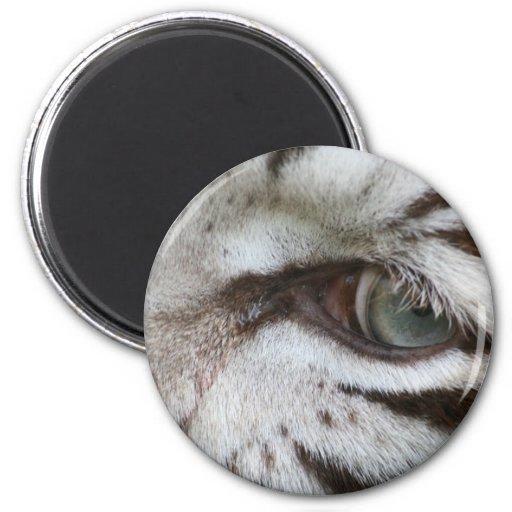 Ojo blanco del tigre imán redondo 5 cm