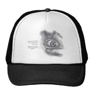 Ojo de la anatomía de los grises gorro