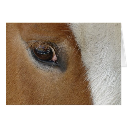 Ojo de la tarjeta del caballo