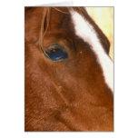 Ojo de los caballos tarjeton