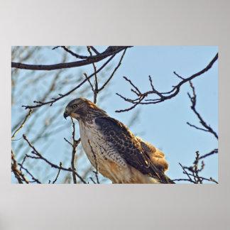 Ojo de los halcones impresiones