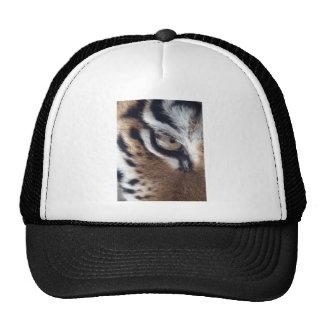 Ojo de un tigre gorra