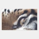 Ojo de un tigre rectangular pegatinas
