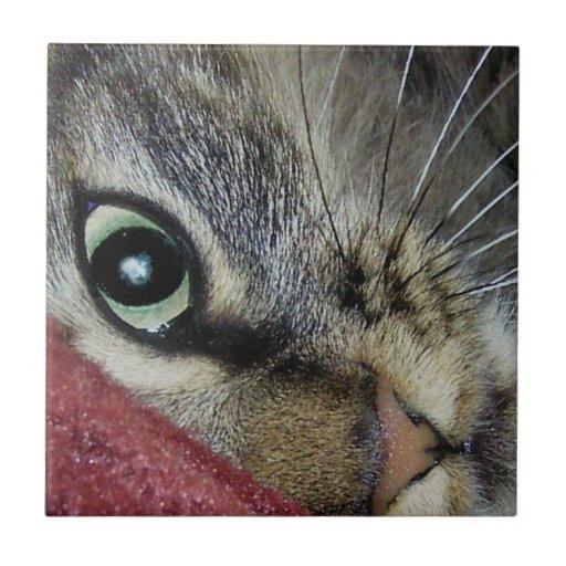 Ojo de una baldosa cerámica del gato del gatito azulejo cuadrado pequeño