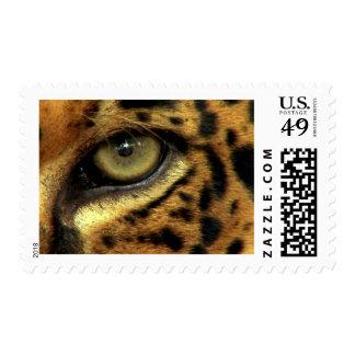 Ojo de una especie en peligro leopardo estampillas