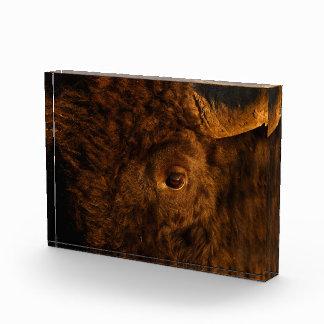 ojo del bisonte