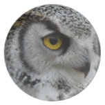 Ojo del búho - foto ascendente cercana platos de comidas