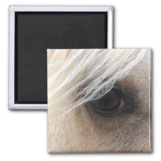 Ojo del caballo del Palomino Imán Cuadrado