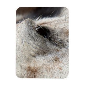 Ojo del caballo imán de vinilo