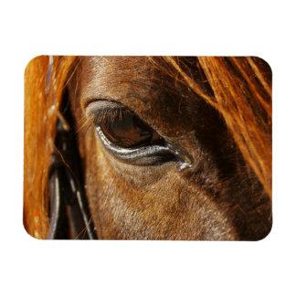 Ojo del caballo iman de vinilo