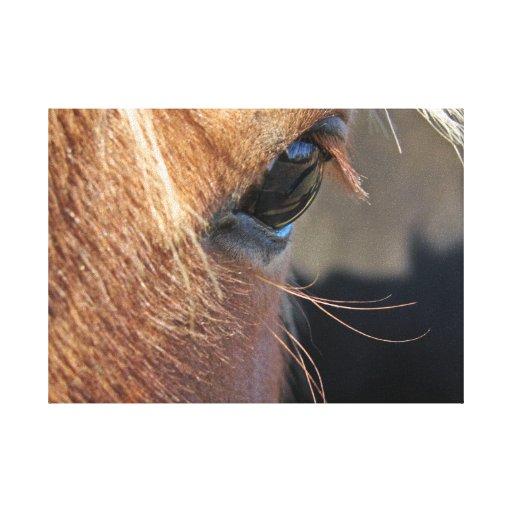 Ojo del caballo lona estirada galerías