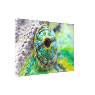 Ojo del camaleón lona envuelta para galerías
