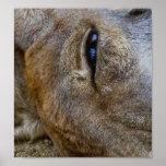 Ojo del canguro poster
