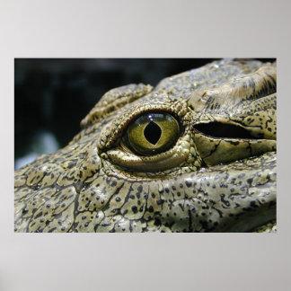Ojo del cocodrilo póster