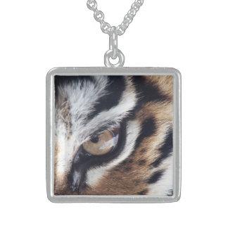 Ojo del collar del tigre 1