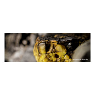 Ojo del este de Diamondback Póster