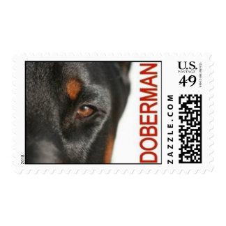 Ojo del franqueo del Doberman