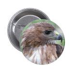 Ojo del halcón pin