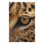 Ojo del leopardo tarjetas informativas
